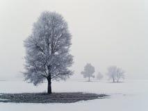 2 frostiga dimmiga trees Royaltyfri Fotografi