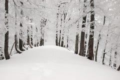 2 góry snow drzewo Zdjęcie Stock