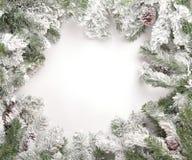 2 gałąź sosny śnieg Obraz Stock