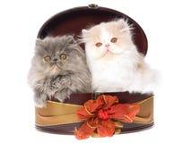 2 gatinhos persas bonitos na caixa de presente Fotografia de Stock Royalty Free