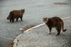 2 gatti marroni lanuginosi molli Immagine Stock Libera da Diritti