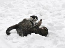 2 gatti nella neve Fotografie Stock