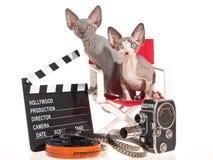 2 gattini di Sphynx con i puntelli di film Immagine Stock
