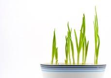 2 gräsplaner Arkivbild