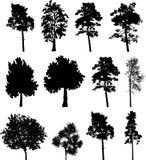 2 grands arbres réglés d'isolement Photo stock
