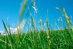 2 green trawy Fotografia Stock