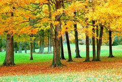2 guld- leaves arkivbilder