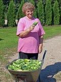 2 gurkor som skördar kvinnan Royaltyfri Bild