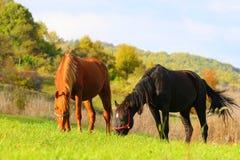 2 häst två Arkivbild