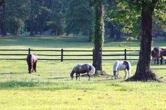 2 hästar Royaltyfri Fotografi