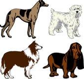 2 hundar royaltyfri illustrationer