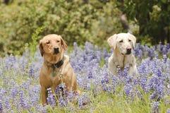 2 Hunde in den Blumen Stockfotografie