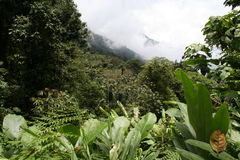 2 i più cloudforest tropicali Fotografie Stock Libere da Diritti