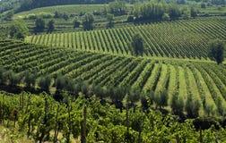 2 italienska vingårdar Royaltyfri Fotografi