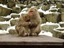 2 japanische Macaques Lizenzfreies Stockfoto