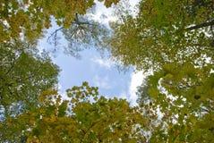 2 jesień Fotografia Stock