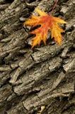2 jesienią tło Fotografia Royalty Free