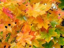 2 jesieni Obrazy Royalty Free