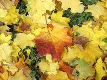 2 jesieni Fotografia Stock