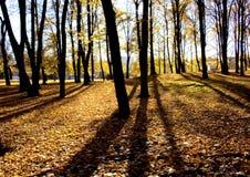2 jesienią miasta Zdjęcie Stock