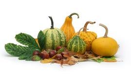 2 jesienią pobrania Fotografia Stock