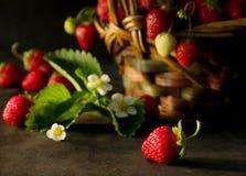 2 jordgubbar Arkivbild