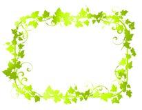 2 kanter inramniner den gröna leafvinen Fotografering för Bildbyråer