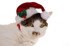 2 katt santa Fotografering för Bildbyråer