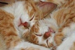 2 kattungar Royaltyfri Fotografi