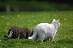 2 Katzen auf Seitenblick Stockfotos