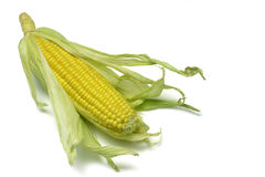 2 kolby kukurydzy Obraz Stock