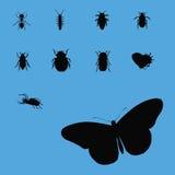 2 kolekcj insekta sylwetka Zdjęcia Royalty Free