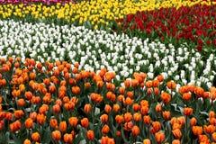 2 kolorowy flowerbed Zdjęcia Stock
