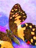 2 kolorowy motyliego Obrazy Royalty Free