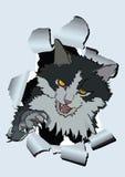2 kot rozwścieczający Zdjęcia Stock