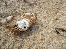 2 krabbaserie Fotografering för Bildbyråer