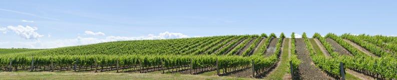 2 krajobrazowy winnica Obraz Stock