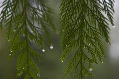 2 kropli deszczu obrazy royalty free