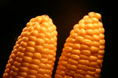 2 kukurydza zdjęcie royalty free