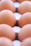 2 kurczaków jajeczna mania Zdjęcia Royalty Free