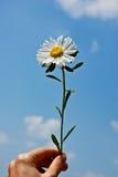 2 kwiatów życie Obrazy Stock