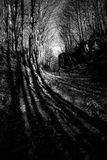 2 långa skuggor för skog Arkivfoton