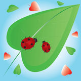 2 ladybugs на зеленых листьях иллюстрация штока