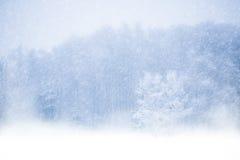 2 lasów zima Zdjęcia Stock