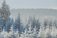2 las nie śnieg Zdjęcia Royalty Free
