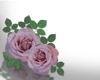 2 Lavender Roses Corner design Stock Photo