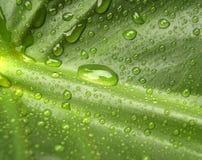 2 leaf water Στοκ φωτογραφίες με δικαίωμα ελεύθερης χρήσης
