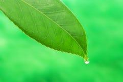 2 liść opadowa woda Zdjęcia Stock