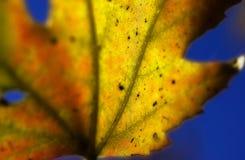 2 liści, Fotografia Stock