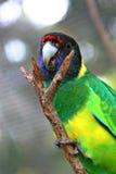 2 lincoln ingen papegojaport Arkivfoto